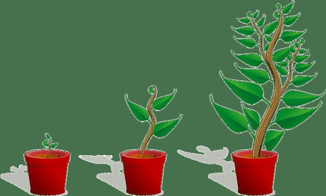 成長する植物の画像