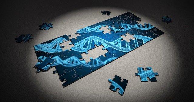 DNAのパズルの画像