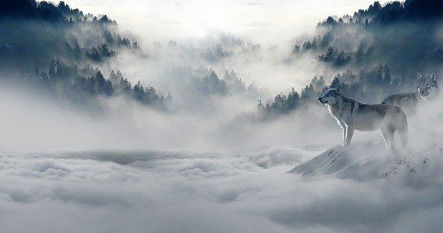 雪山と狼の画像