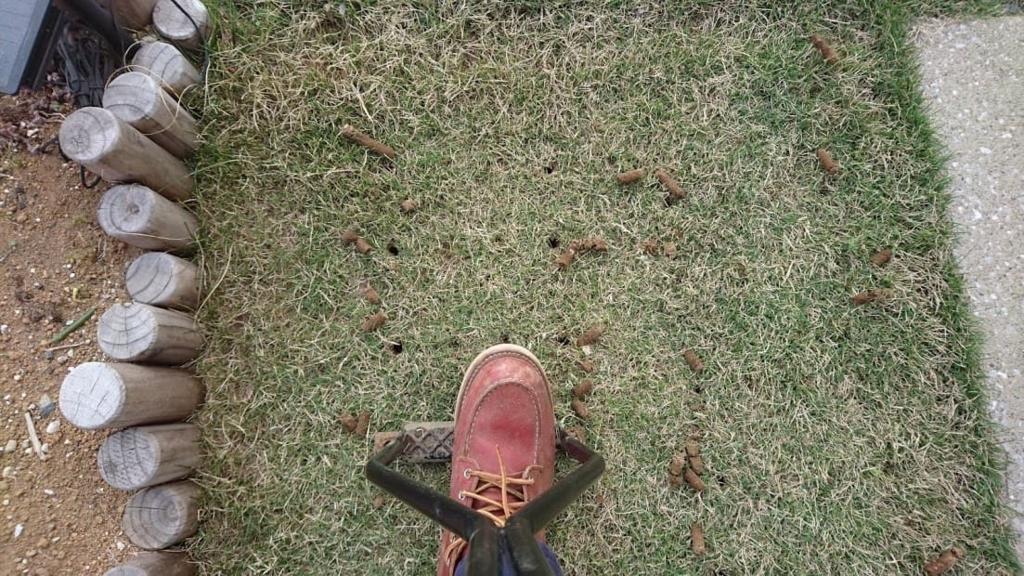 芝生のエアレーション ローンパンチ