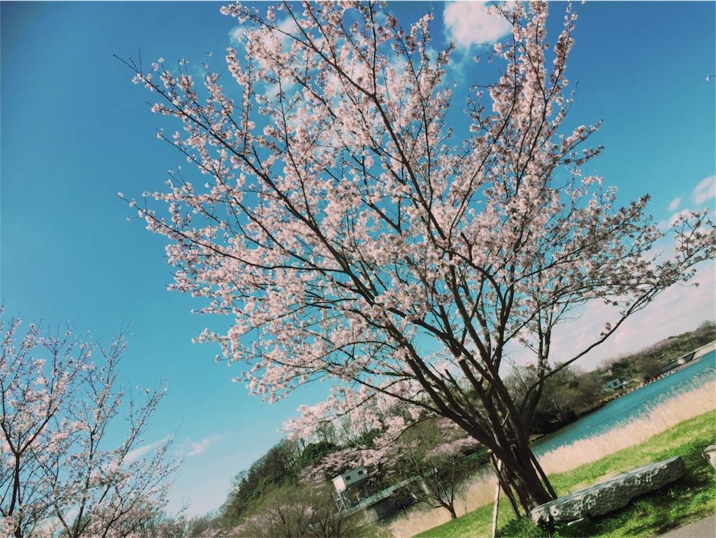 f:id:naotonozinsei:20170413181730j:image