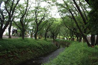 20100712senbonzakura.jpg