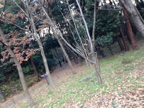 20131224izuminomori.jpg