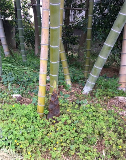住宅街の竹林