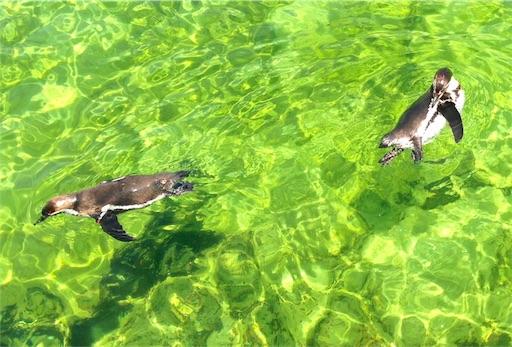葛西臨海水族園ペンギン3