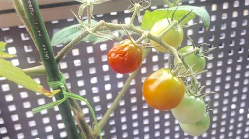 煮えたミニトマト