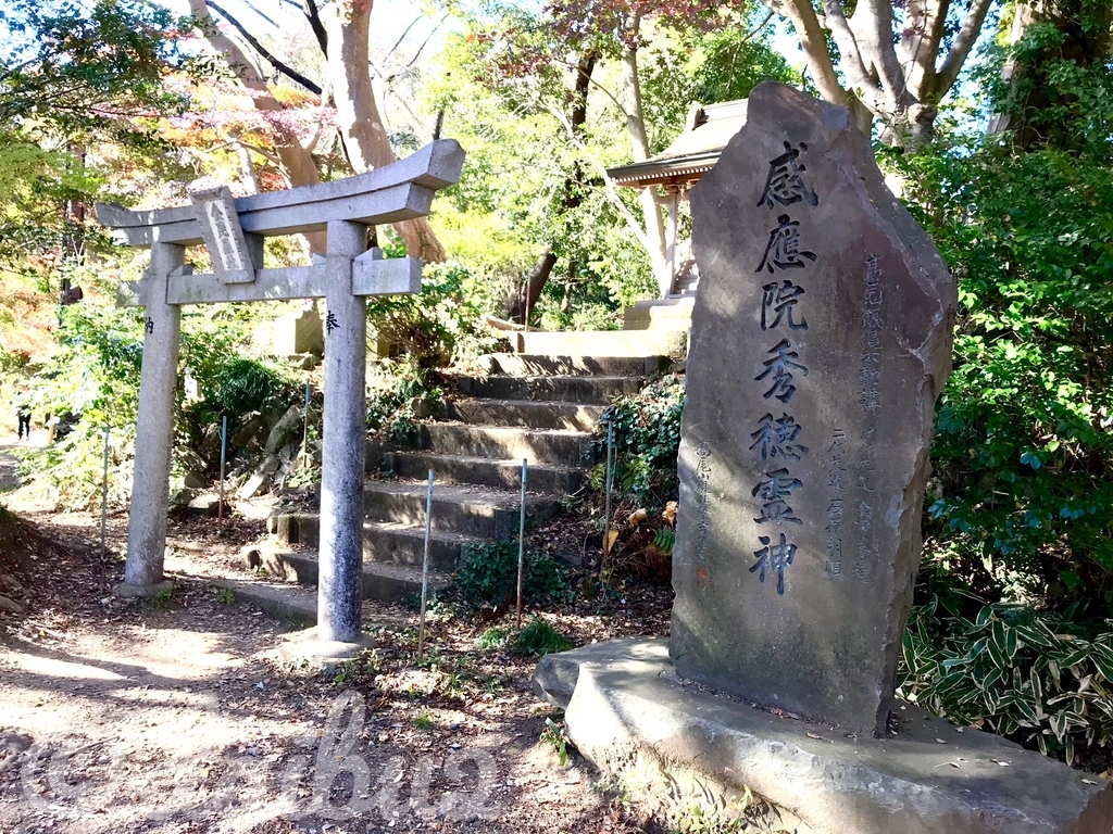 f:id:nara-daibu2:20181124222448j:plain