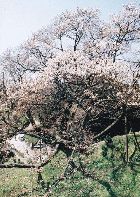 f:id:naradaisukikurabu:20180312072244j:plain