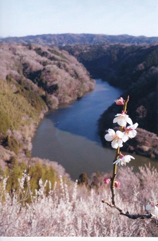 f:id:naradaisukikurabu:20180324221915j:plain