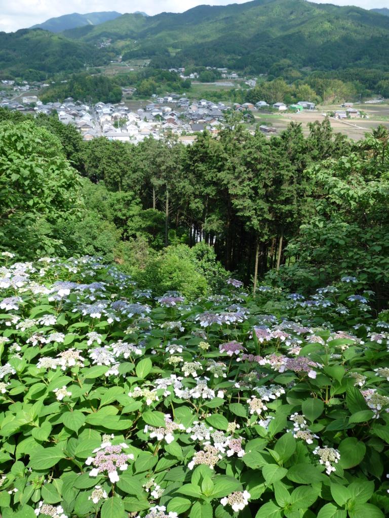 f:id:naradaisukikurabu:20180603080142j:plain