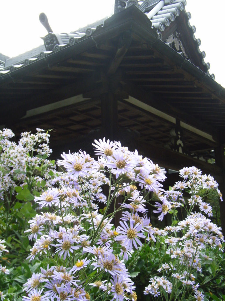 f:id:naradaisukikurabu:20180827072635j:plain