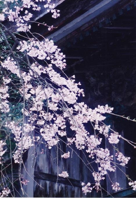 f:id:naradaisukikurabu:20190323095105j:plain
