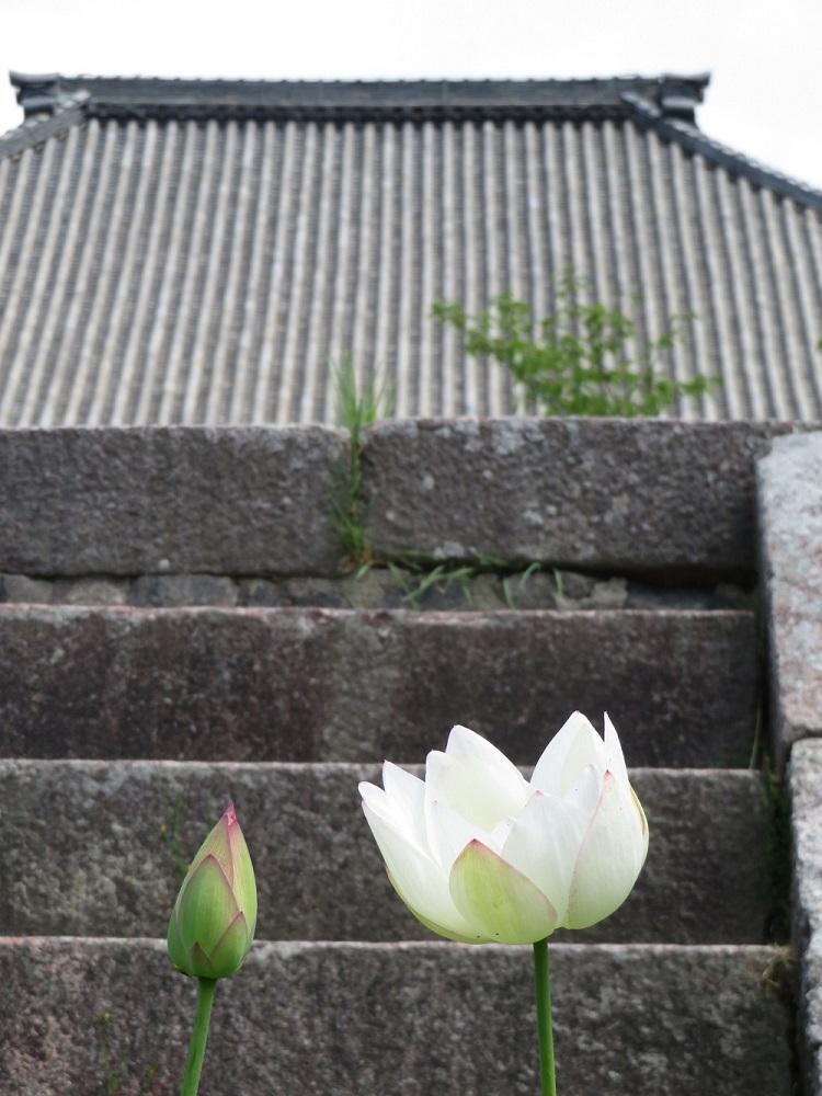 f:id:naradaisukikurabu:20190622143844j:plain