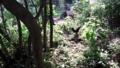 20130810森を散歩
