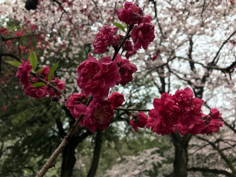 f:id:narinarissu:20170408133045j:image