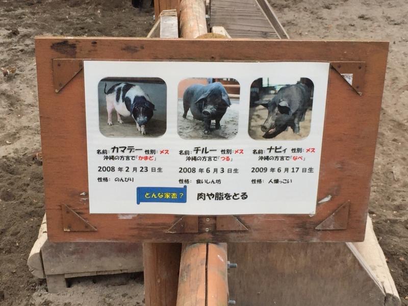 f:id:naruki_h:20170119143655j:plain