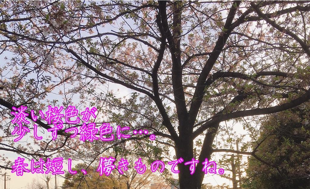 f:id:narumi087:20190416230927j:image