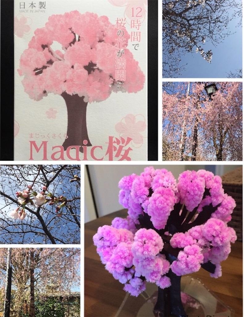 f:id:narumi087:20200410180545j:image