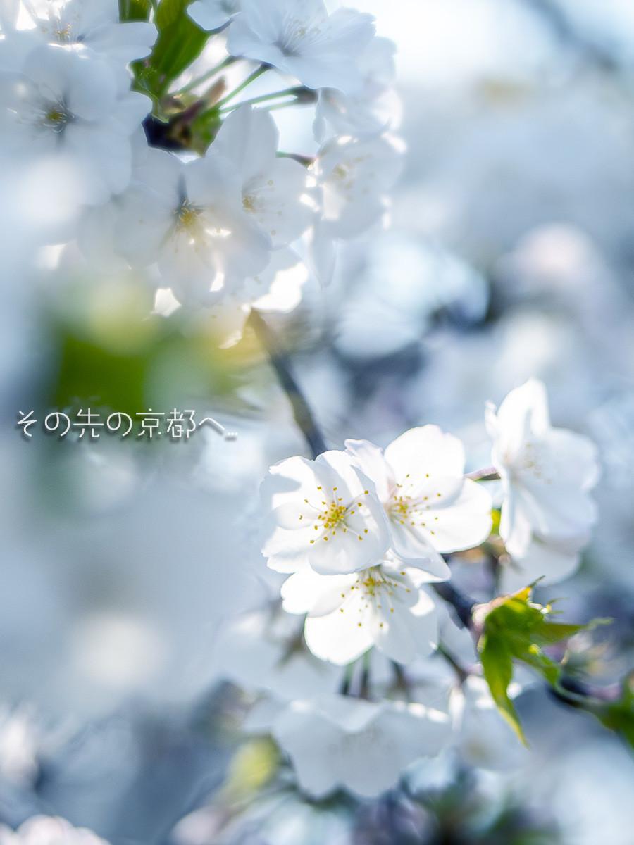 f:id:narutakiso:20190407105038j:plain