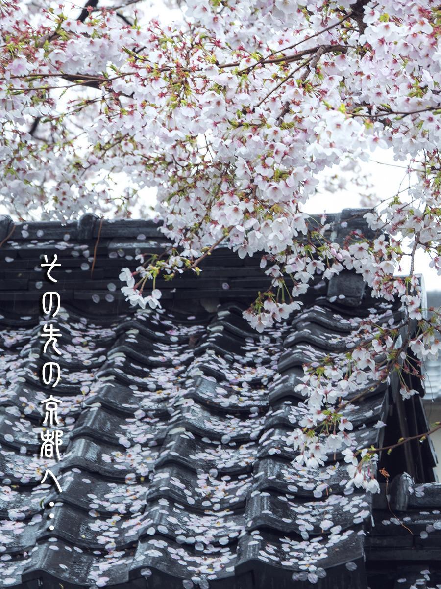 f:id:narutakiso:20190410113444j:plain