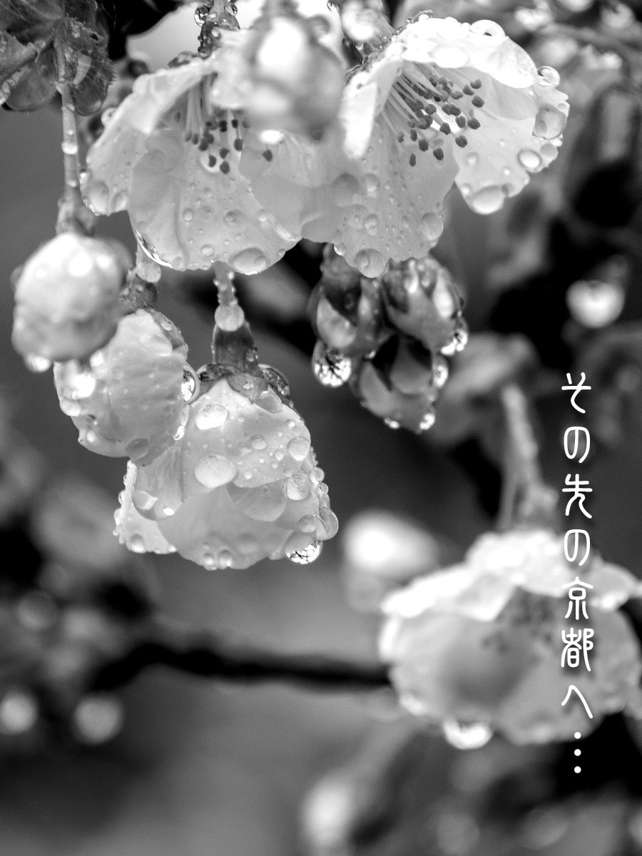 f:id:narutakiso:20190410115148j:plain