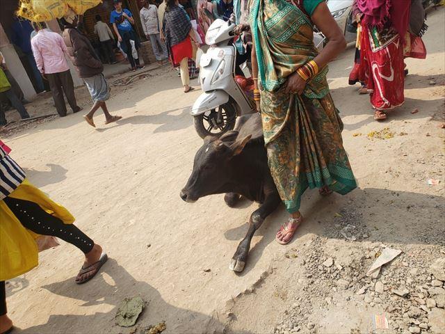 Varanasi cow