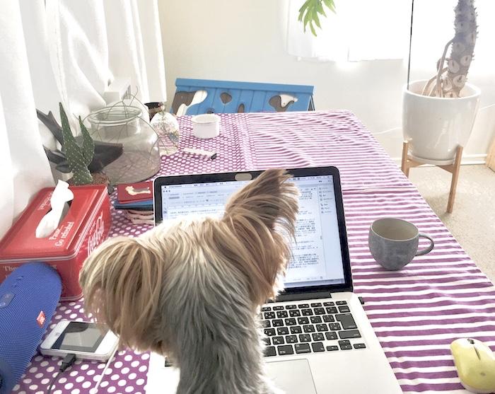 在宅勤務では企画書づくりやディスプレイを不要とする業務を中心にダイニングテーブルで行なっています。愛犬が邪魔してくるのが嬉しい悩みポイント