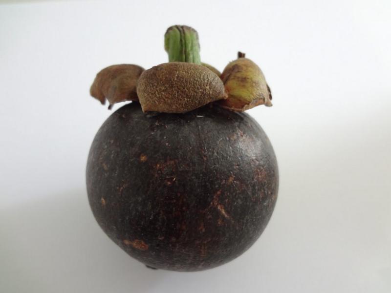 実物のマンゴスチン