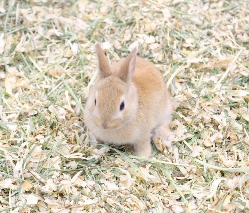 芝生にいるウサギの写真