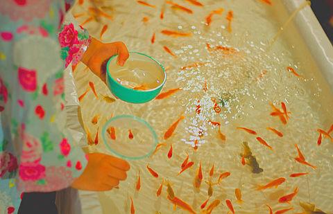 金魚すくい_ブログ用