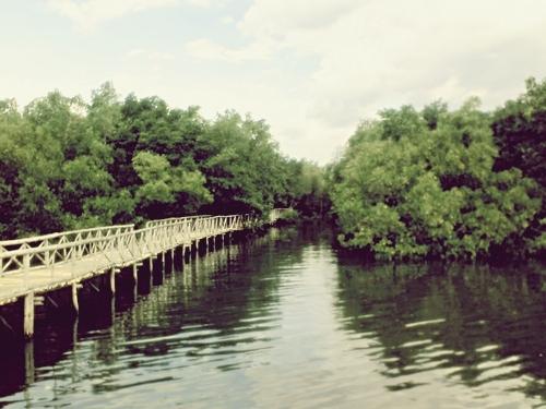 セブ島 川の写真