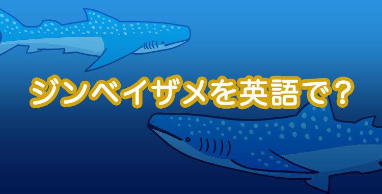ジンベイザメを英語で表すと、ジンベイザメとは、ネイティブキャンプ