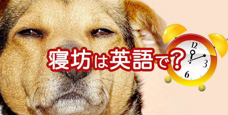 寝坊は英語で?、言い訳、犬、可愛い、画像
