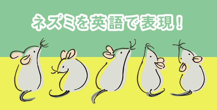 ネズミ、ペット、イラスト、ドブネズミ、ハリネズミ