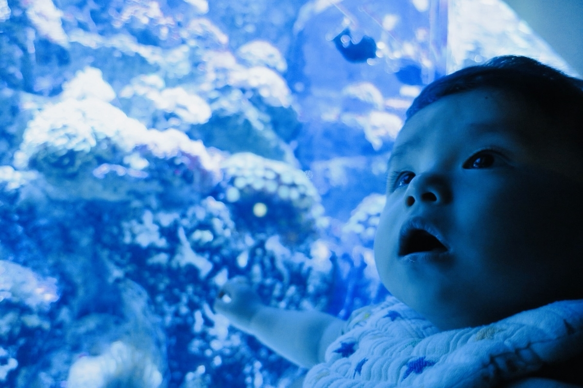 水族館、クラゲ、イラスト、画像、子供