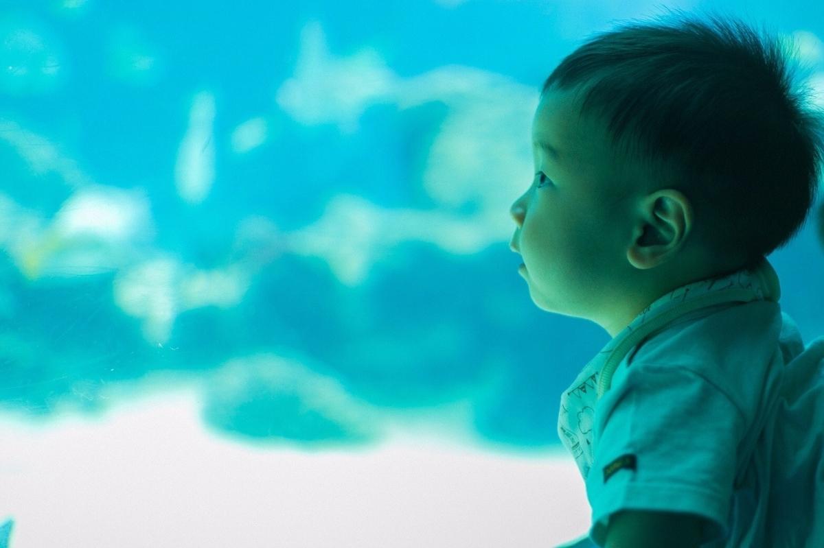 水族館、赤ちゃん、子供、水槽、画像