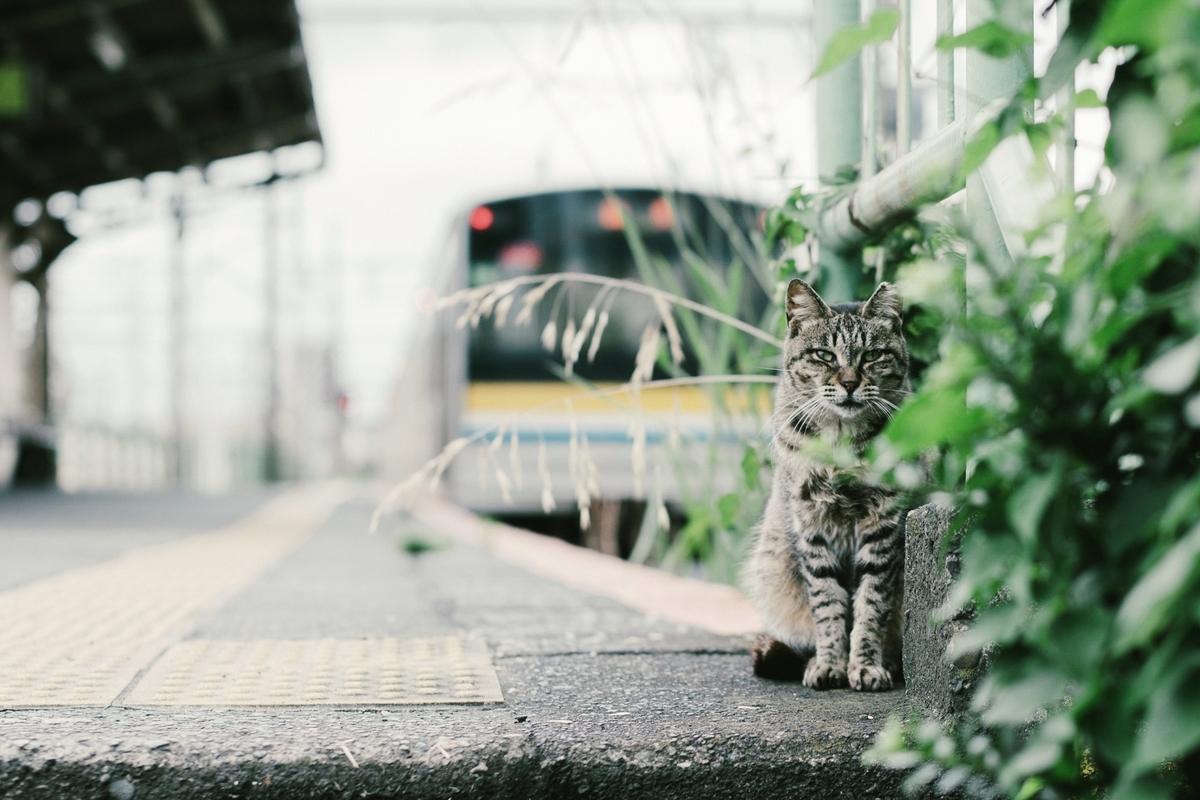 猫、電車、耳をすませば、イメージ画像