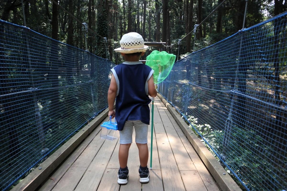 クワガタ、虫取り、少年、夏、公園