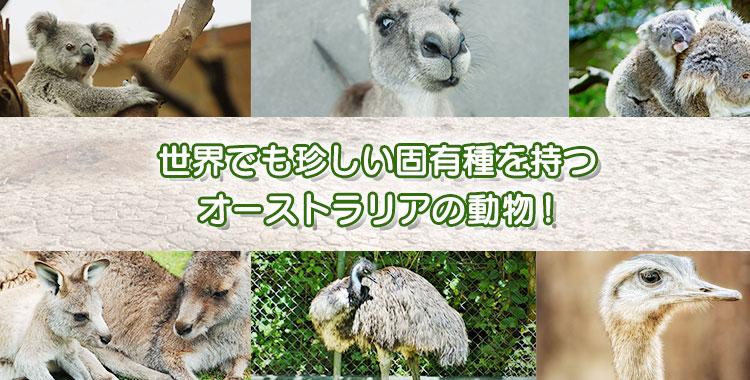 オーストラリア、動物、固有種、カンガルー、エミュー