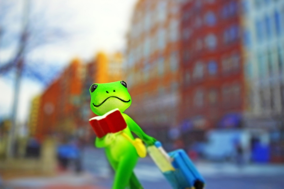 現地ツアー、カエル、旅行