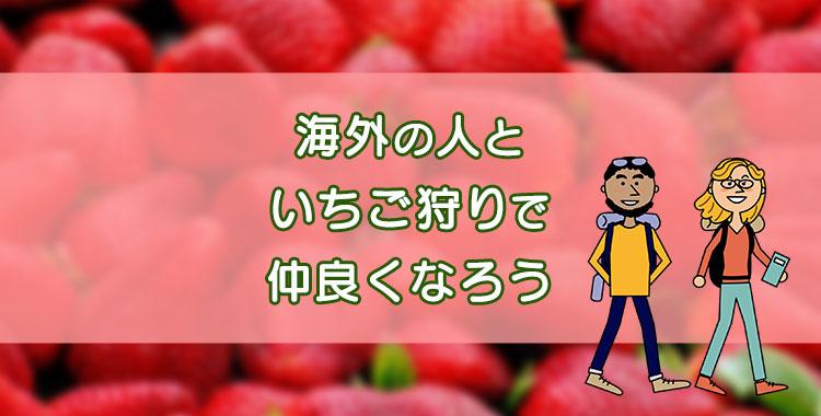 いちご狩りを英語で、日本の文化「いちご狩り」、ネイティブキャンプ