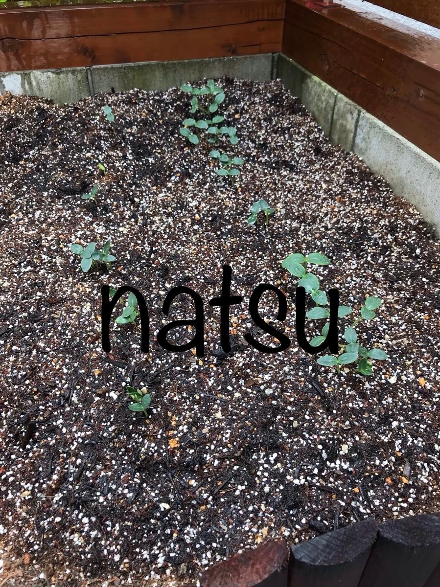 f:id:natsu16family:20190804143044j:plain