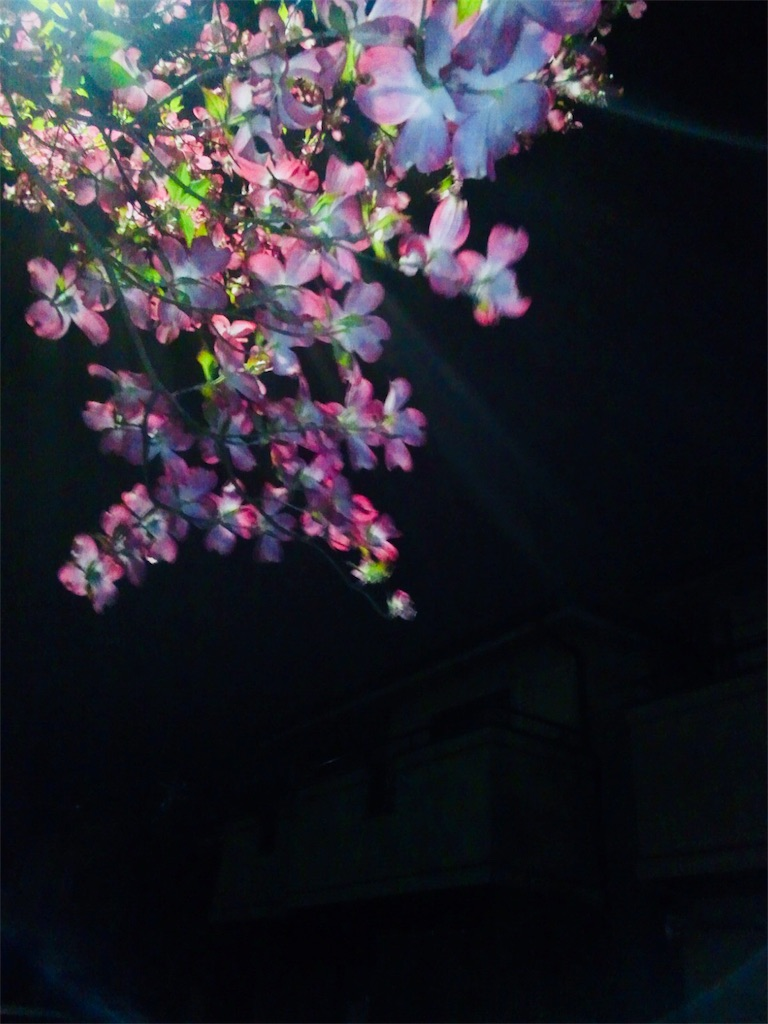 f:id:natsudoki2019:20190228201804j:image