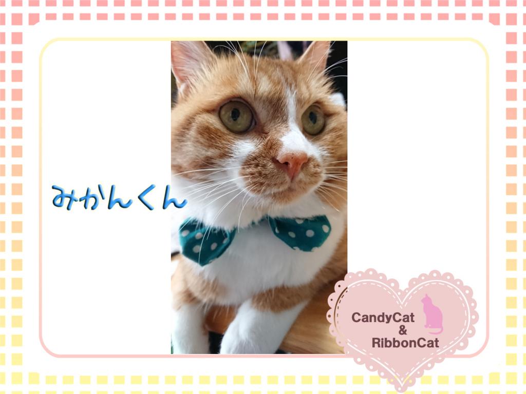 f:id:natsugakuru:20170701225431j:plain