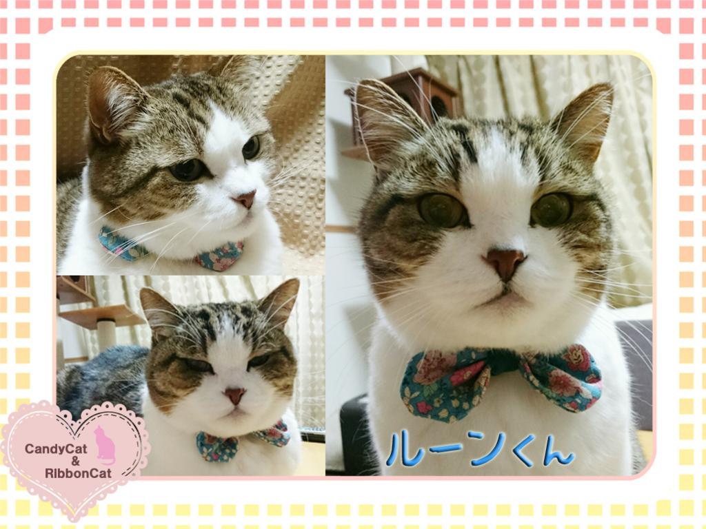f:id:natsugakuru:20170707133127j:plain