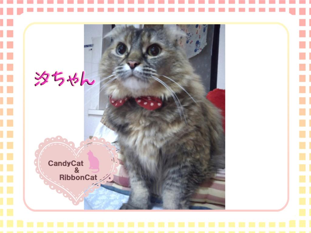 f:id:natsugakuru:20170718190559j:plain