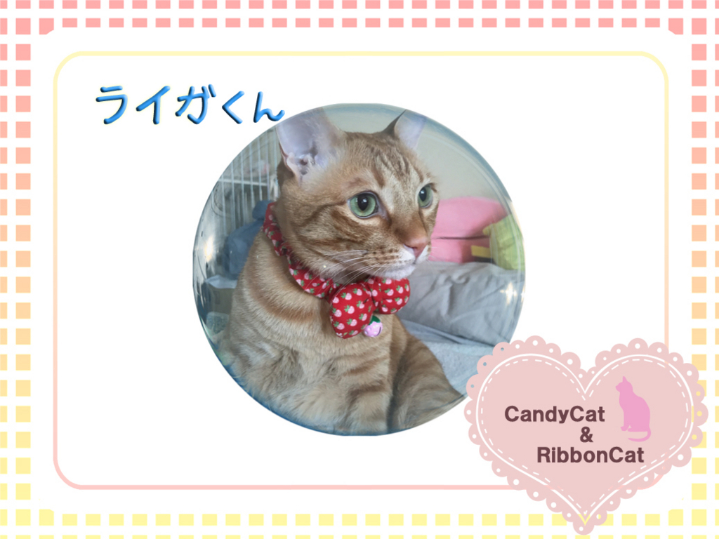 f:id:natsugakuru:20170801112002j:plain