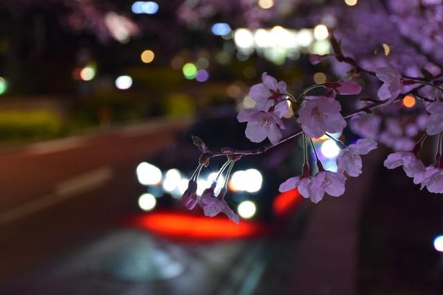 f:id:natsuki5555:20190423141110j:image