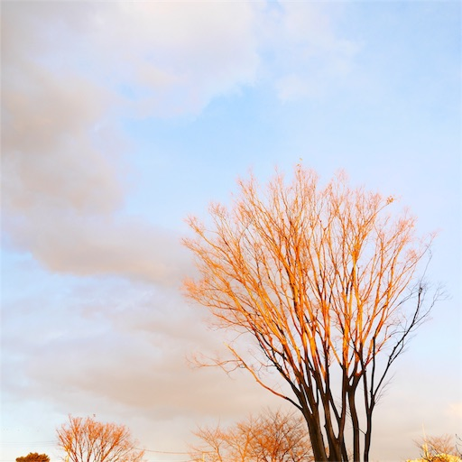 f:id:natsukihana:20180221091847j:image