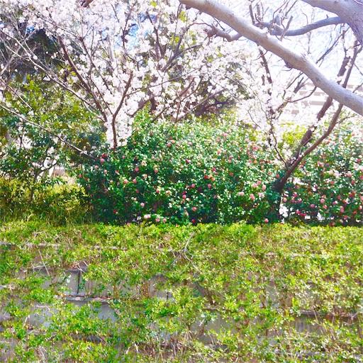 f:id:natsukihana:20190402223307j:image